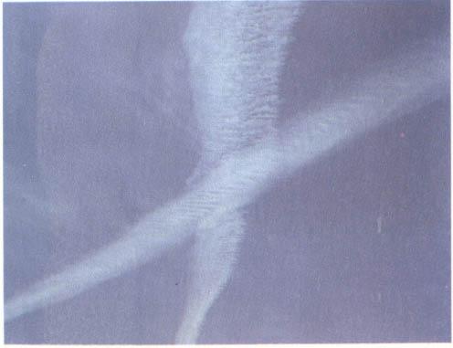 1991-day-p46-2.jpg